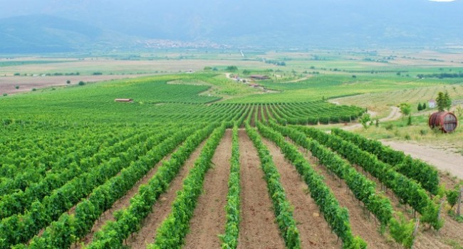 WINE & GOURMET IN ANCIENT PLOVDIV